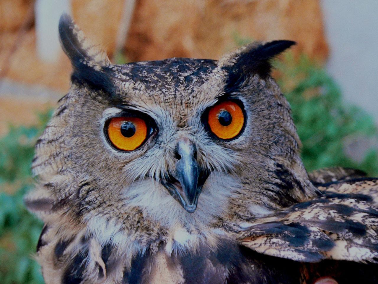 Удивленная сова. Космик лук