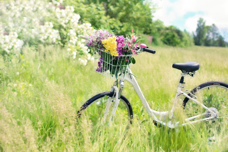 Велосипед с цветами. Велосипед в поле