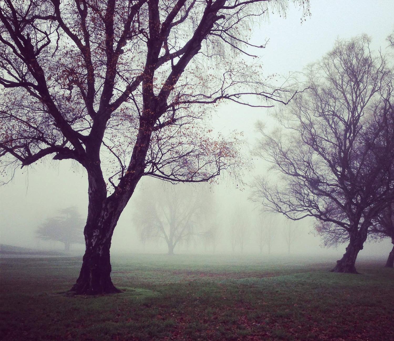 Деревья в сказочном лесу. Туман и лес