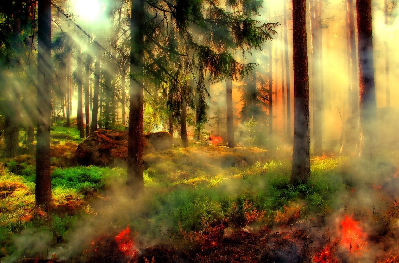 Сказочный мир лар фон Триера