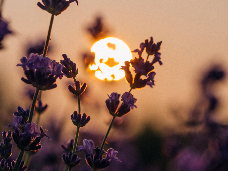 Закат в поле. Лето