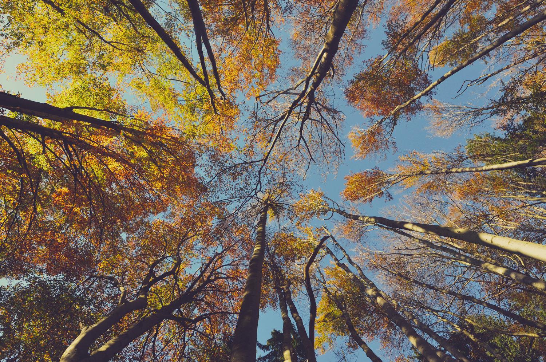 что такое осень - это небо