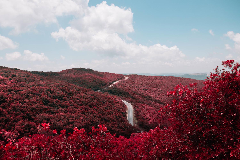 Красные пейзажи. Красные деревья