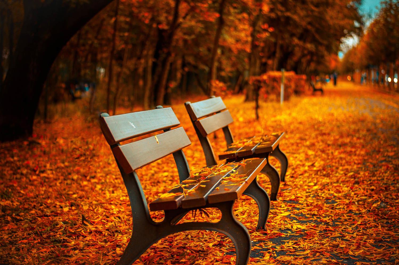 Чудесная золотая осень