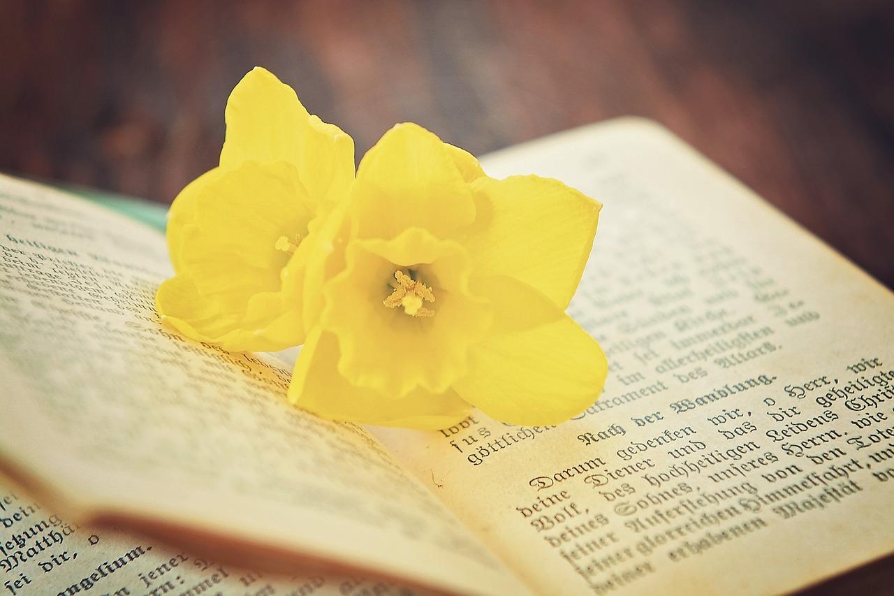 Книги и цветы. Чтение книг